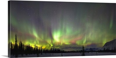 Northern Lights And Spruce Trees In Broad Pass, Southcentral Alaska