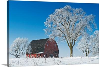 Old Red Barn In Winter, Near Oakbank, Manitoba, Canada