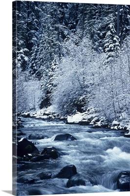 Oregon, Willamette National Forest, Salt Creek, Snowy Trees