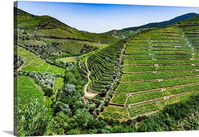 Overview Of The Terraced Vineyards In The Douro River Valley, Norte, Portugal