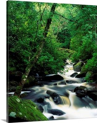 Owengarriff River, Killarney National Park, County Kerry, Ireland