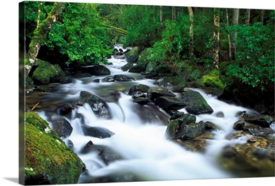 Owengarriff River, Killarney National Park, County Kerry, Ireland; River In Park Woods