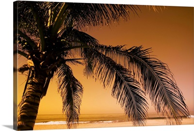 Palm Tree And Sunset In Mexico