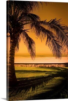 Palm Tree In Mazatlan, Mexico