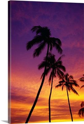 Palm Tree Silhouettes, Sunset, Waikiki Beach, Hawaii, Usa