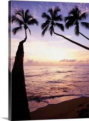 Palm Trees At Dusk, Barbados