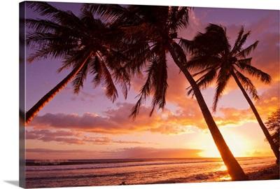 Palm trees at sunset, Olowalu, Maui, Hawaii, United States of America