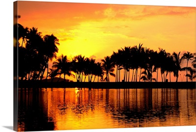Palm Trees In Pink Orange Sunset Skies With Reflections On Water