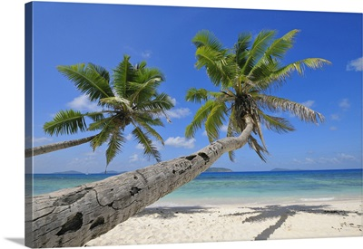 Palm Trees On Beach With Indian Ocean, La Digue, Seychelles