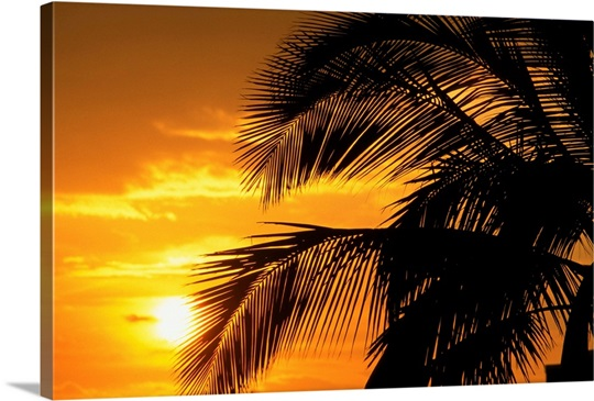 Palm Trees Silhouette With Sunset Orange Sky And Clouds In Background