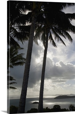Palm Trees Silhouetted Against Dark Cloudy Sky