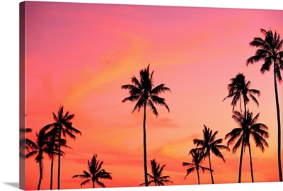 Palm Trees Silhouetted Against Hazy Orange Skies