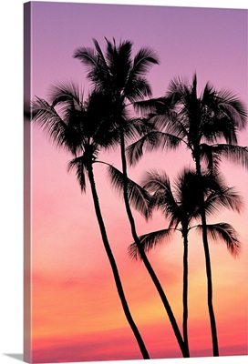Palm Trees Silhouetted In Sunset Sky