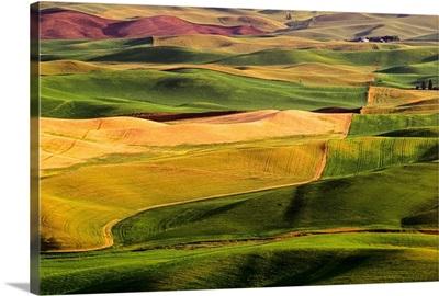Palouse Fields, Whitman County, Washington