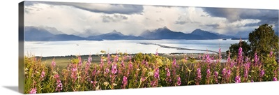 Panorama Of Fireweed With Homer Spit, Kachemak Bay And The Kenai Mountains