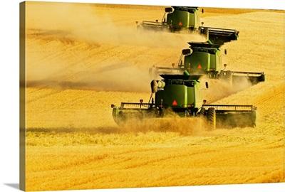 Paplow Harvesting Company custom combines in a wheat field near Ray, North Dakota