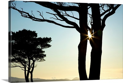 Parknasilla, County Kerry, Ireland, Silhouette Of Trees With The Sunlight