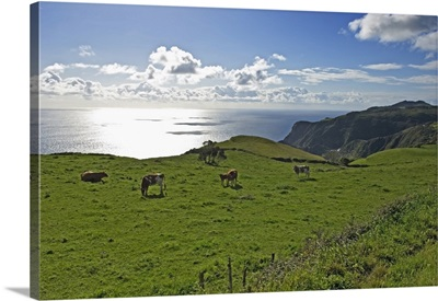 Pastoral Landscape Of Santa Maria Island