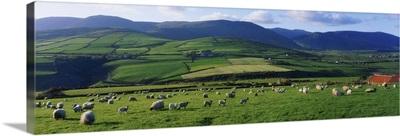 Pastoral Scene Near Anascual, Dingle Peninsula, County Kerry, Ireland