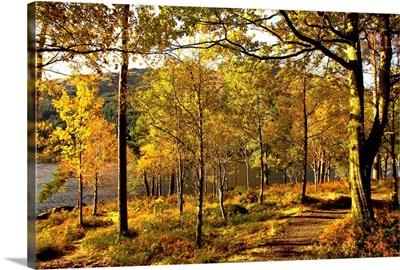 Path Through Autumn Woods, Argyll And Bute, Scotland