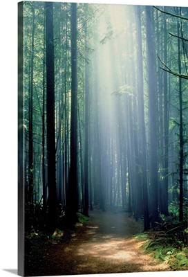 Path Through Trees In Mist, China Beach, British Columbia, Canada