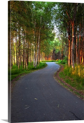 Paved path winding through the forest, Tony Knowles Coastal Trail, Anchorage, Alaska