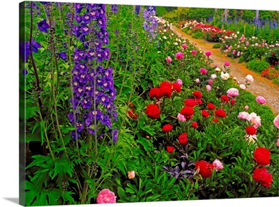 Peonies And Delphiniums in Mount Congreve Gardens, Co Waterford, Ireland