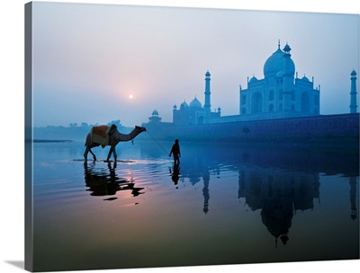 Person And Camel In Front Of Taj Mahal; Agra, India