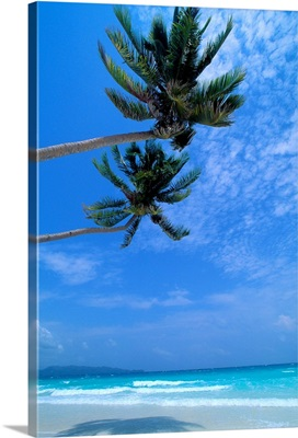 Philippines, Boracay Island, White Sand Beach, Clear Waters, Two Palm Trees