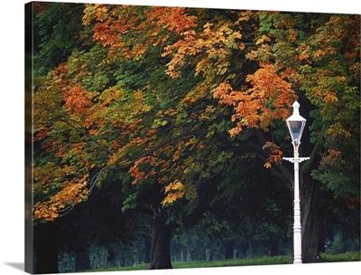 Phoenix Park, Dublin, Co Dublin, Ireland; Lamppost In A Park