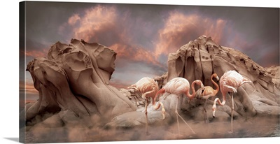 Pink Flamingoes Stand In Shallow Water