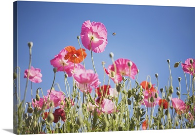 Pink Flowers Against Blue Sky