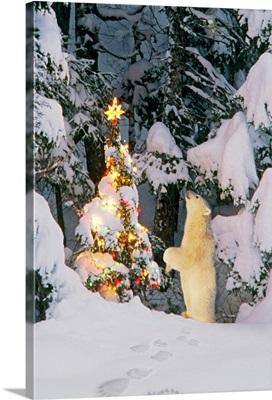 Polar bear cub standing on hind legs looking at star on Christmas tree