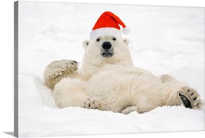 Polar Bear wearing Santa hat lying on its back in snow