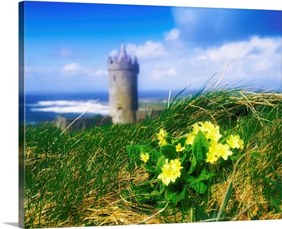 Primrose Flower In Foreground, Doonagore Castle In The Distance, Co Clare, Ireland