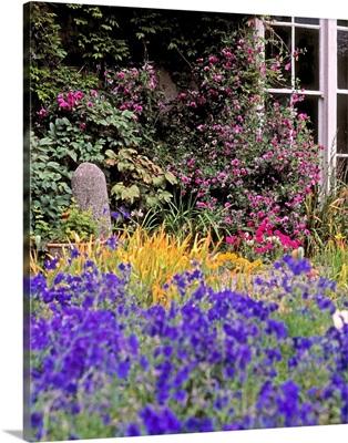 Primrose Hill, Lucan, Co Dublin, Ireland; Lobelia Flowers