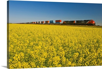 Rail Cars Carrying Containers Passe A Canola Field, Manitoba, Canada