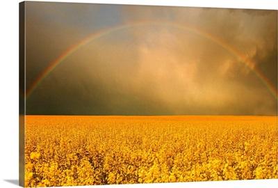 Rainbow Over Farmer's Field