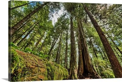 Rainforest in Strathcona Provincial Park, British Columbia, Canada