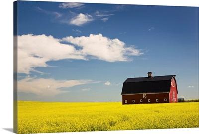 Red Barn In A Flowering Canola Field, Alberta, Canada