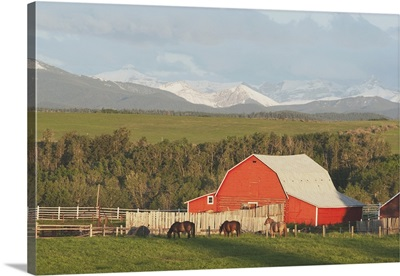 Red Barn With Horses Grazing