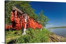 Red Salmon hang on drying rack along Kuskokwim River shoreline