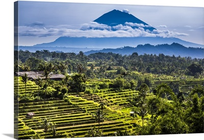 Rice Terraces With Gunung Agung In The Background, Jatiluwih, Bali, Indonesia
