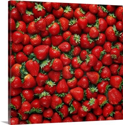 Ripe strawberries, Monterey County, California