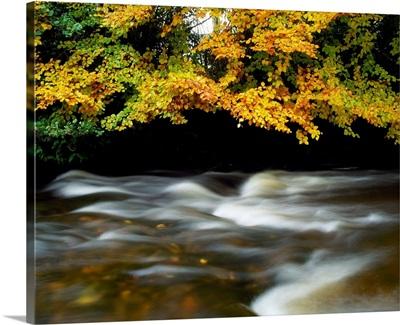 River Camcor, Co Offaly, Ireland