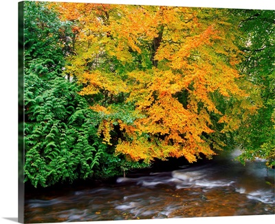River Camcor In The Fall, County Offaly, Ireland