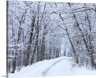 Road Across Snow-Covered Forest, Saint-Adrien-D'irlande, Quebec, Canada
