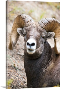 bighorn asian singles Big horn county was named for the big horn mountains which form its  (new mexico and utah - albeit through a single point,  021% asian, 007% pacific.