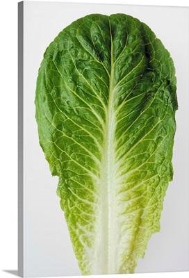 Romaine lettuce leaf