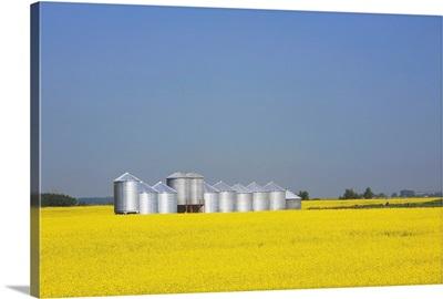 Row Of Metal Grain Bins In Canola Field, Alberta, Canada